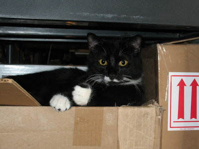 My Tuxedo Cat:  Randy