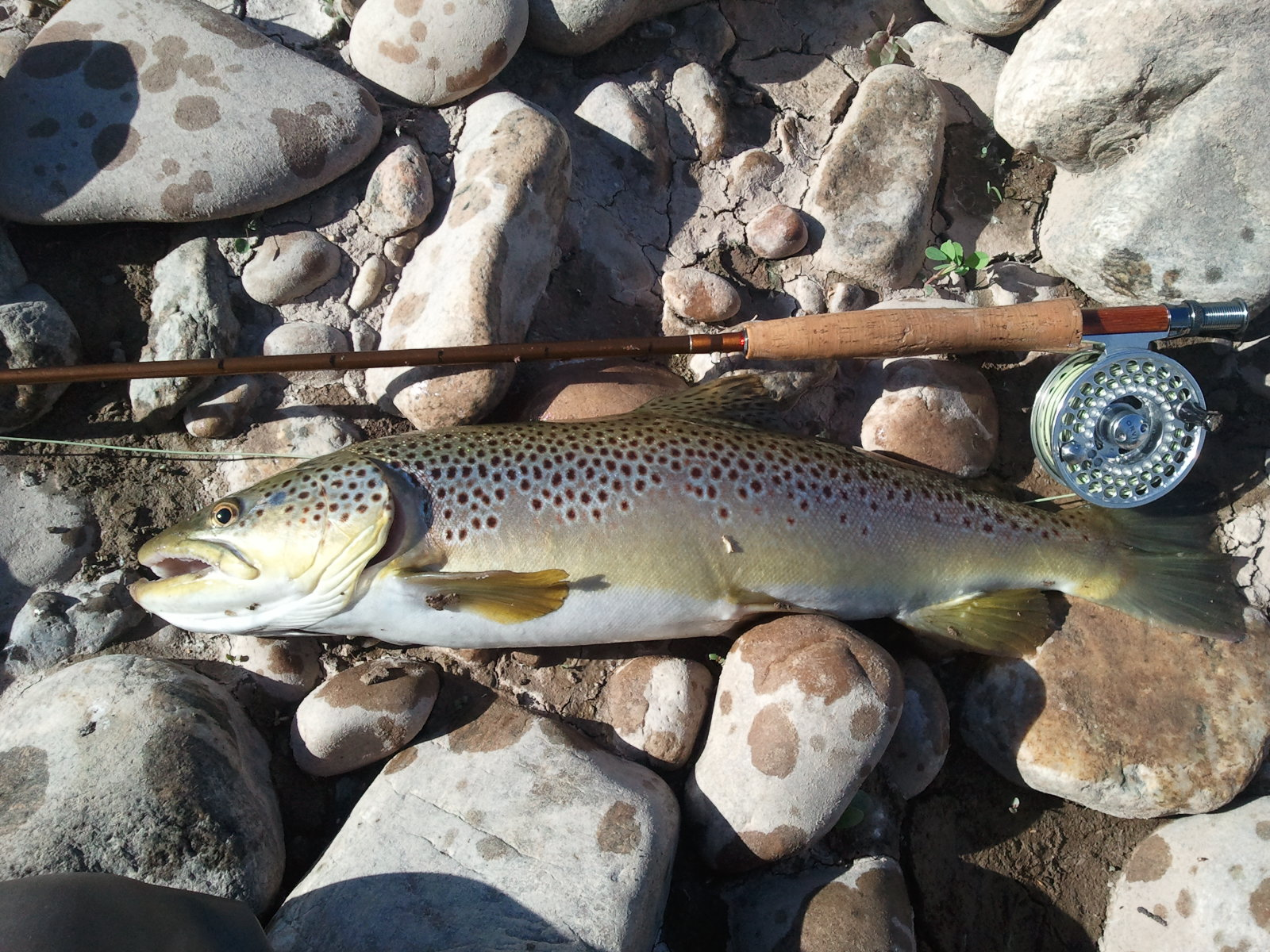 Northern utah fly fishing photos for Weber river fishing