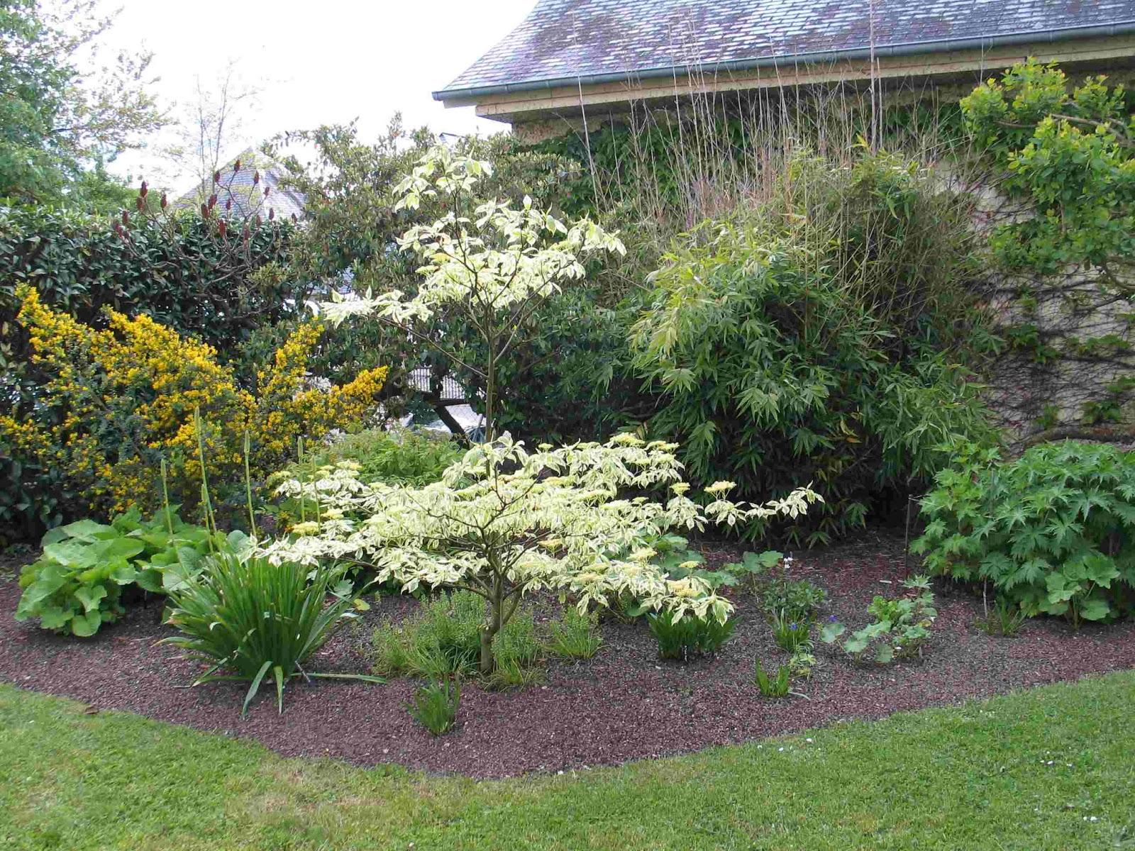 Bleu delphinium massif agrandi for Acheter un composteur de jardin