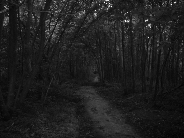 and pitch black dark  Dark Path In The Woods