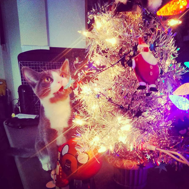 Funny cats - part 80 (40 pics + 10 gifs), cat and christmas tree
