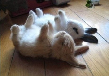 Cute bunnies sleeping like death