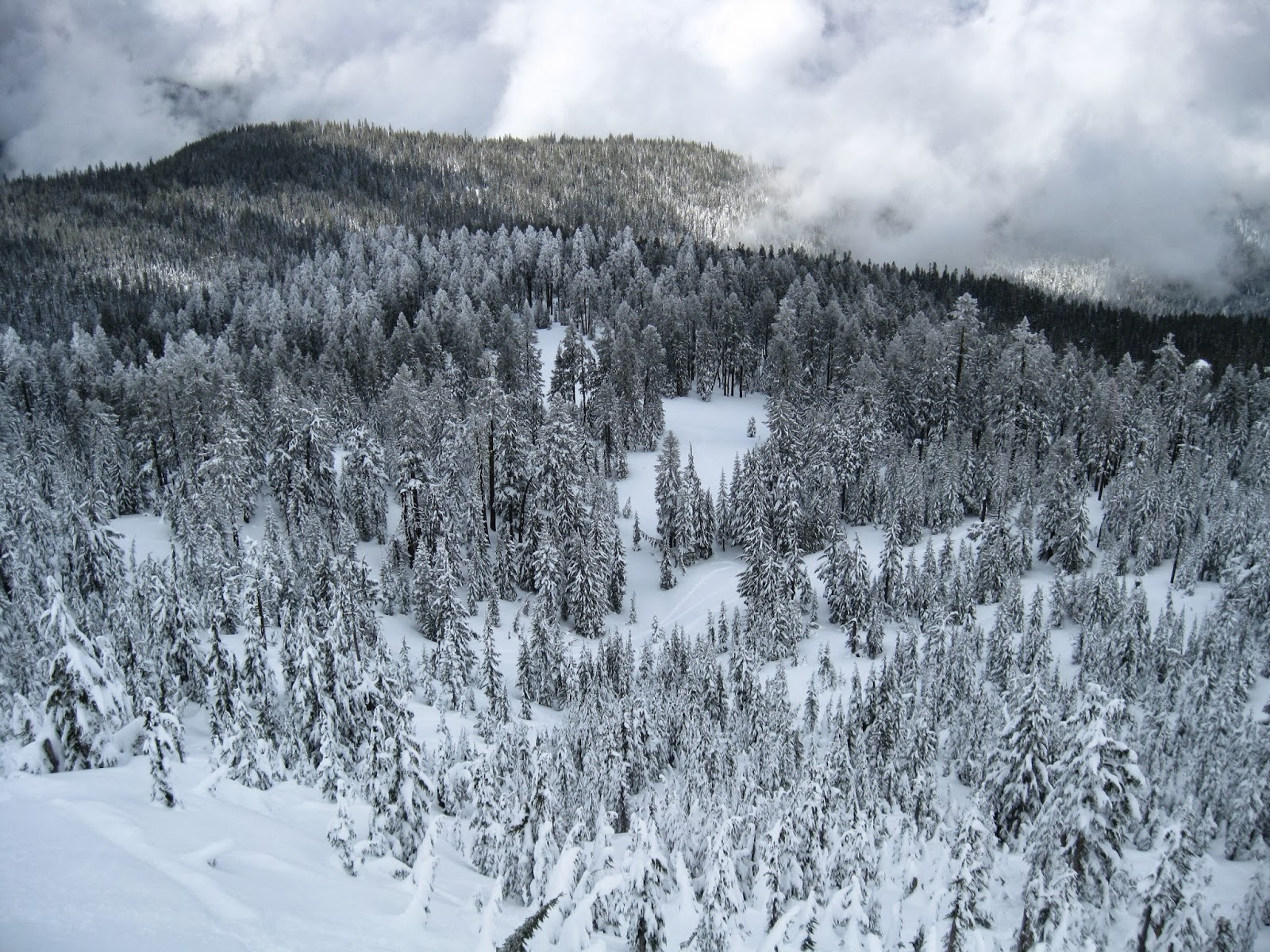 Alpine ski resorts plagued by lack of snow - A View Into The Proposed Mt Ashland Ski Expansion Area In The Winter Of 2011 The Lack Of A Deep Snow Pack This Season Has Brought The Ski Resort To The