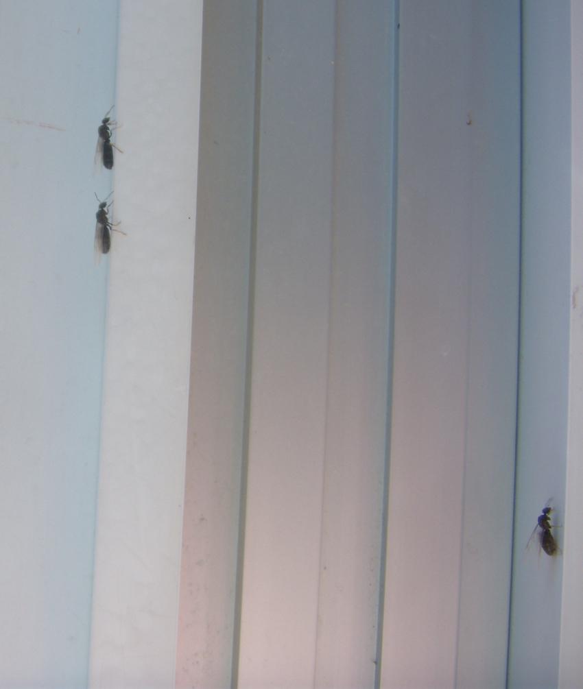 Termiten Im Haus: Apfelkuchen, Cosinus Und Farbenpracht: Ameisen