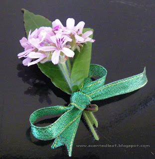 Boutonniere with rose-scented pelargonium flowers and bay-laurel leaves