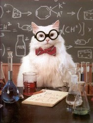 cat with glasses and bow tie doing science