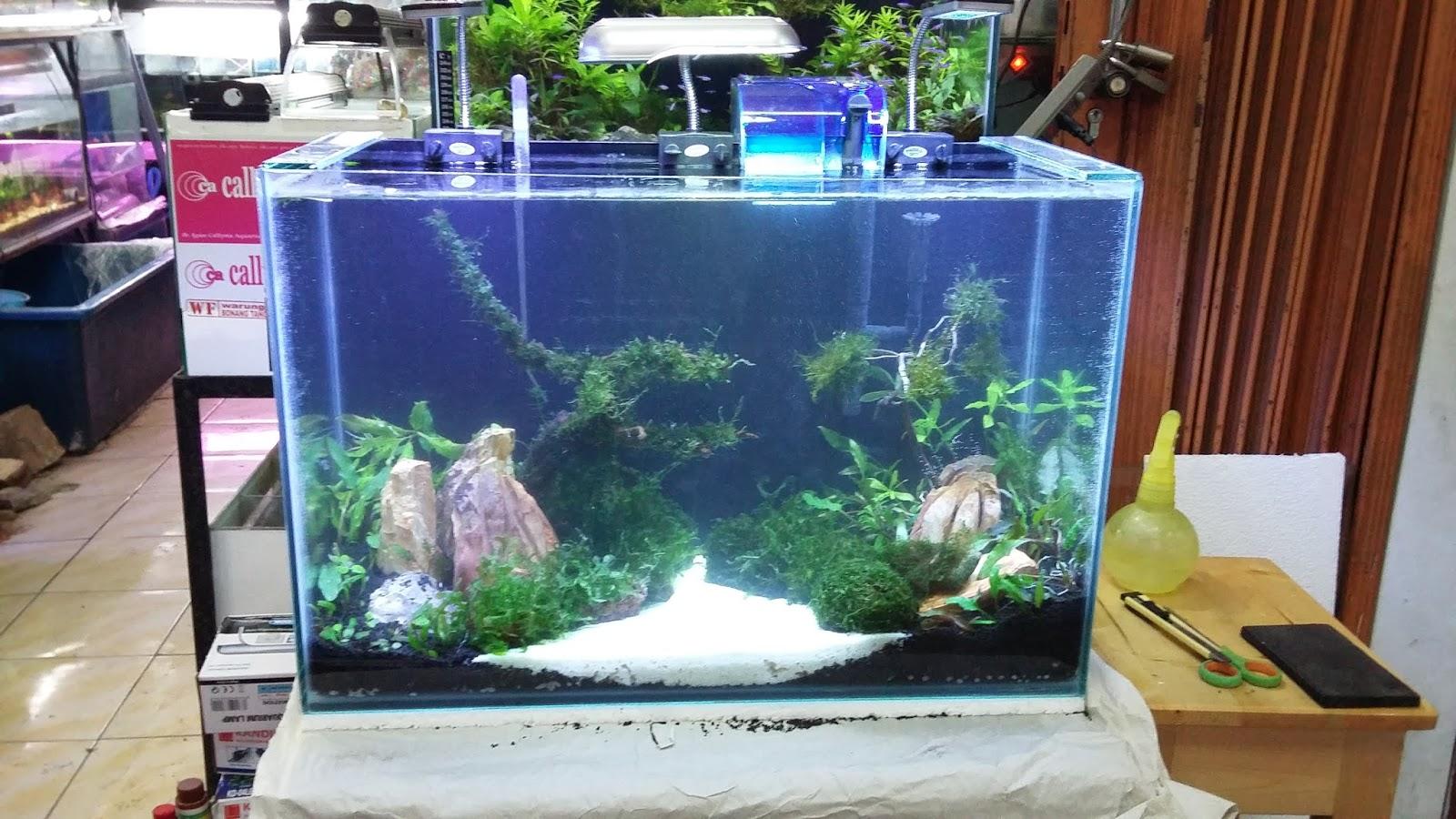 aquascape: PAKET AQUARIUM AQUASCAPE 60x30x35 Rp. 1jt rupiah