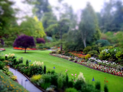 The beautiful Sunken Garden at Butchart Gardens shot with a tilt shift effect reveals a beautiful and delicate model world.