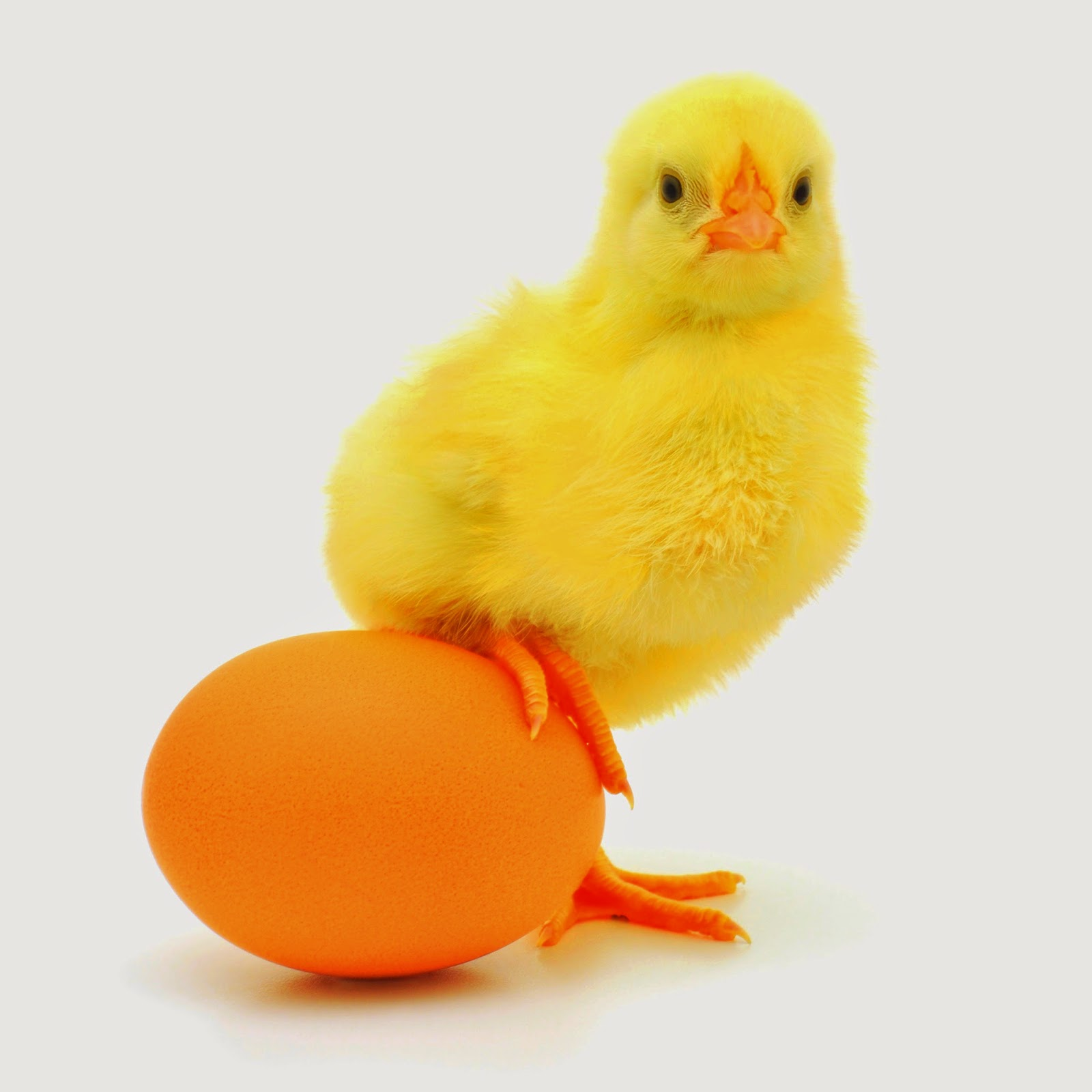 eggs, health tips, hair tips