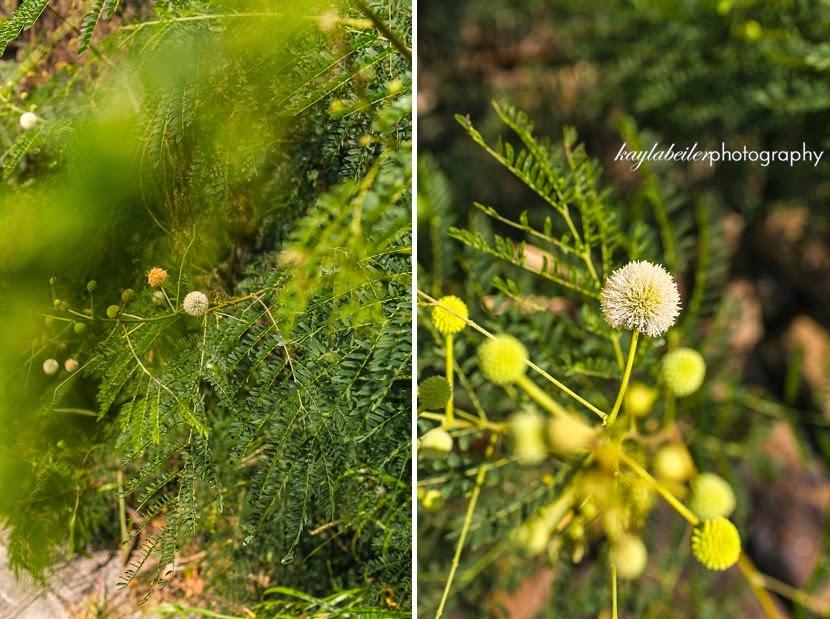 flora oahu photo