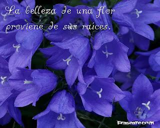 La belleza de una flor proviene de sus raíces.