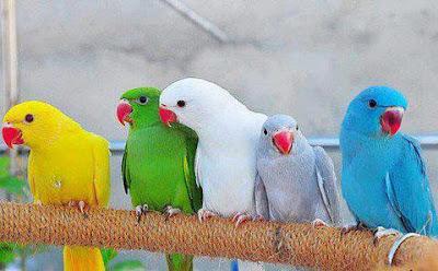 Imágenes Bonitas Animales