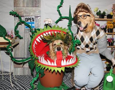 Little shop of horrors pet costumes 1