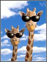 Girafas com óculos de sol