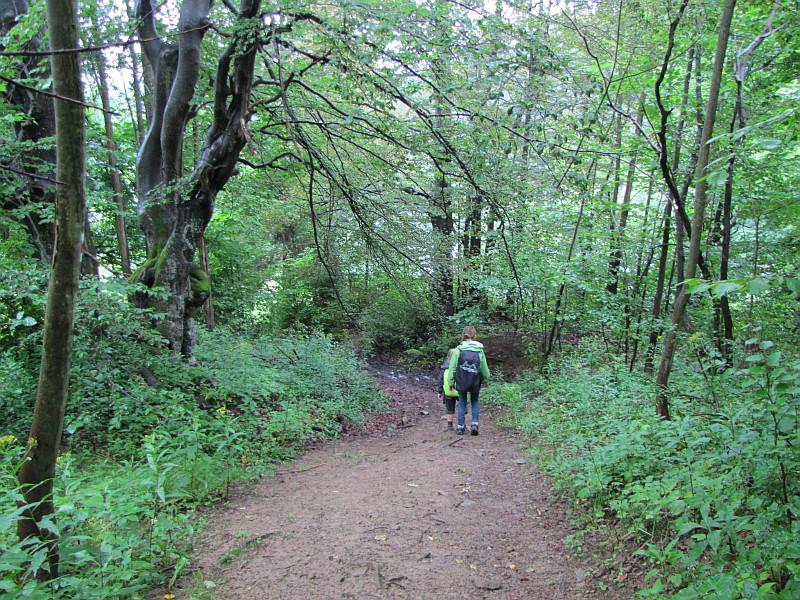Skraj lasu przed przysiółkiem Bugalovci.