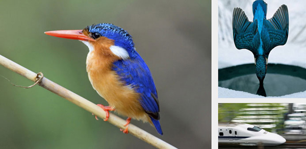 biomimicry - kingfisher beak and bullet train