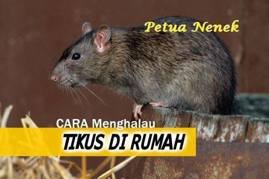 Cara Tikus | newhairstylesformen2014.com