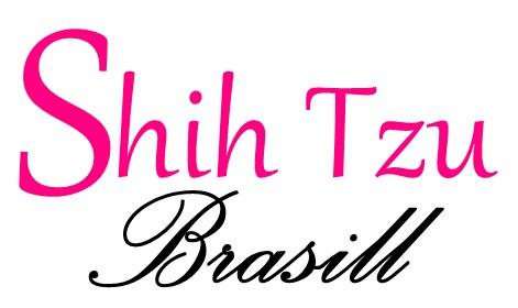 Shih Tzu Brasill - Tudo sobre shih tzu