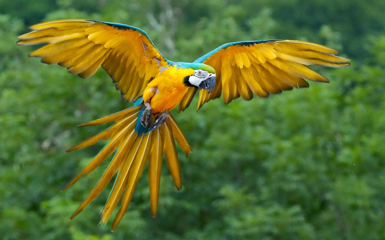 Which bird is the most beautiful
