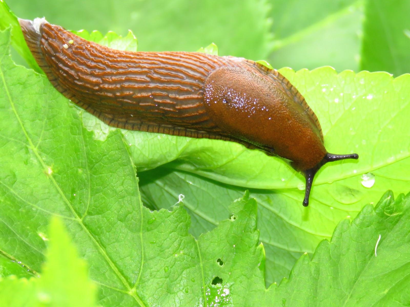 Bugblog A Slug Day