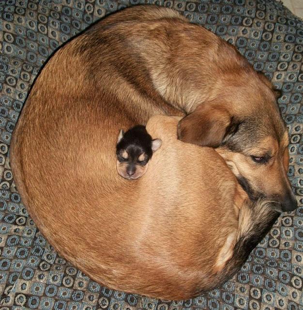 Cadela chocando um filhote