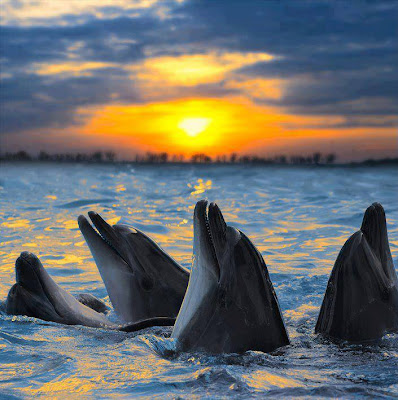 4 delfines