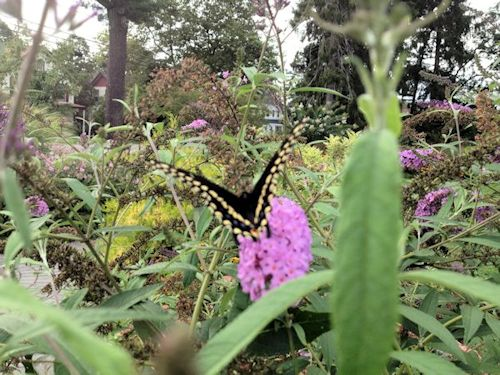 A GUIDE TO NORTHEASTERN GARDENING Long Island Peace