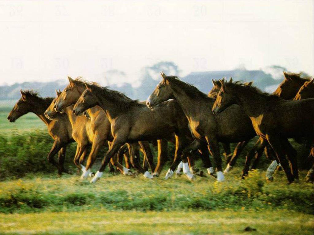 Must see   Wallpaper Horse Chromebook - horse_wallpaper_003_1024  Best Photo Reference_68467.jpg