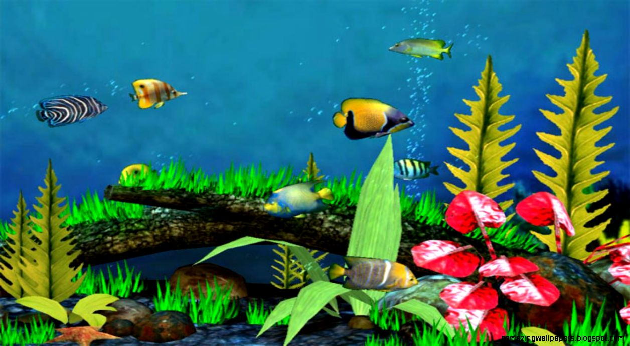 3d Fish Wallpaper Desktop Amazing Wallpapers