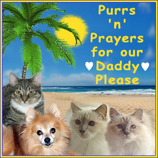 Purrs and prayers for Raz's dad