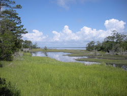 North Carolina Salt Marsh