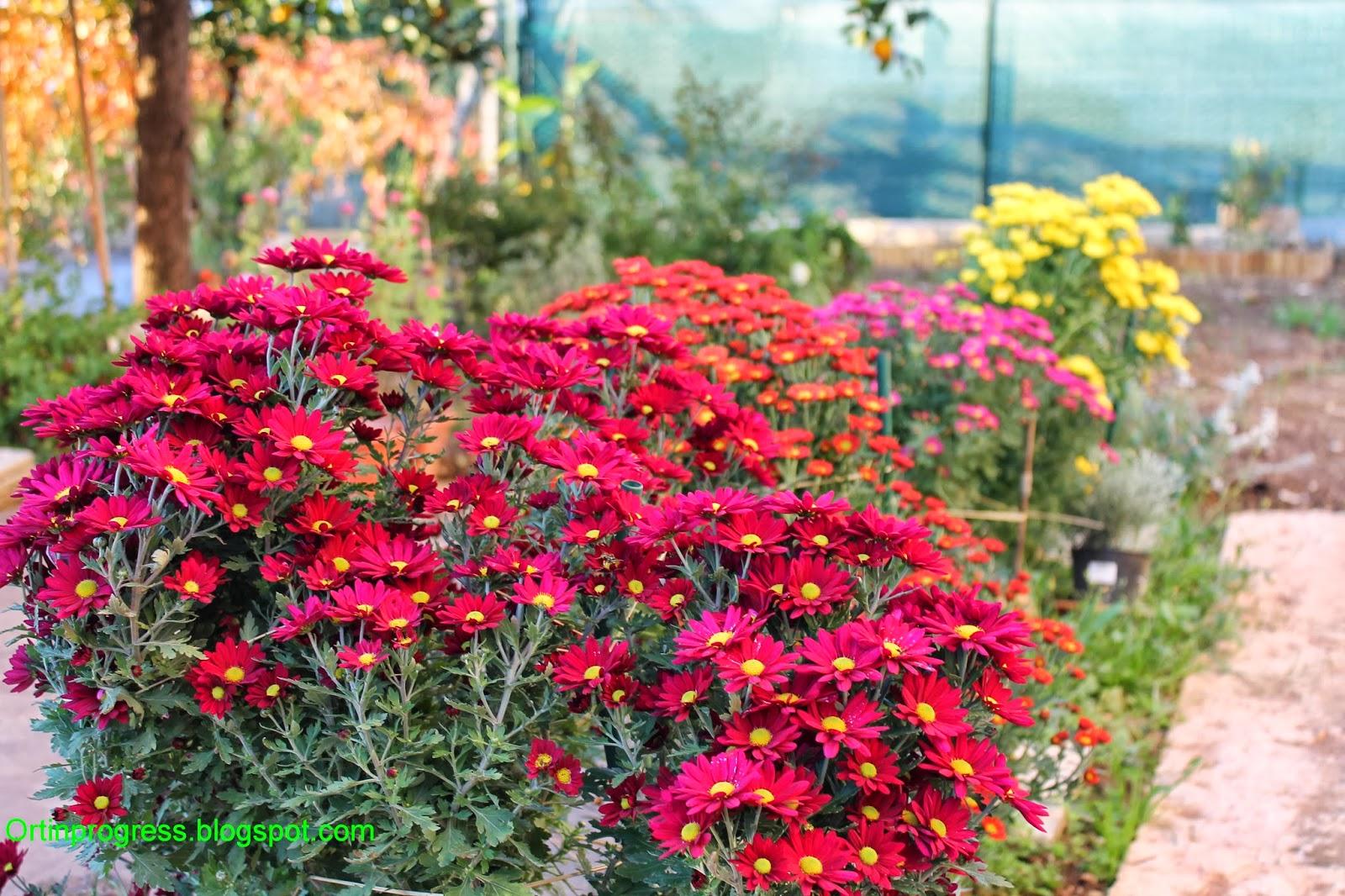 Orti in progress fiori e foglie come fiamme for Albero di cachi