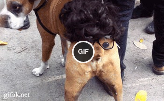 That's the best gif i every liked