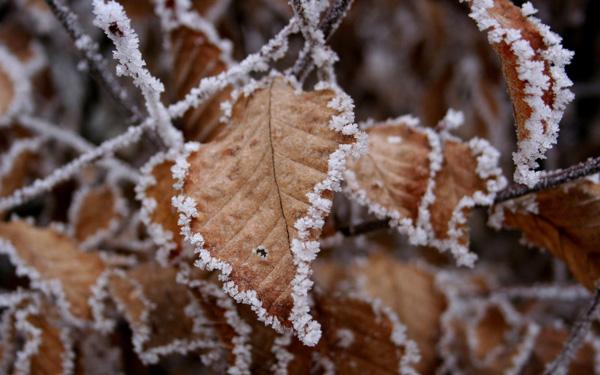 Brown Leaves