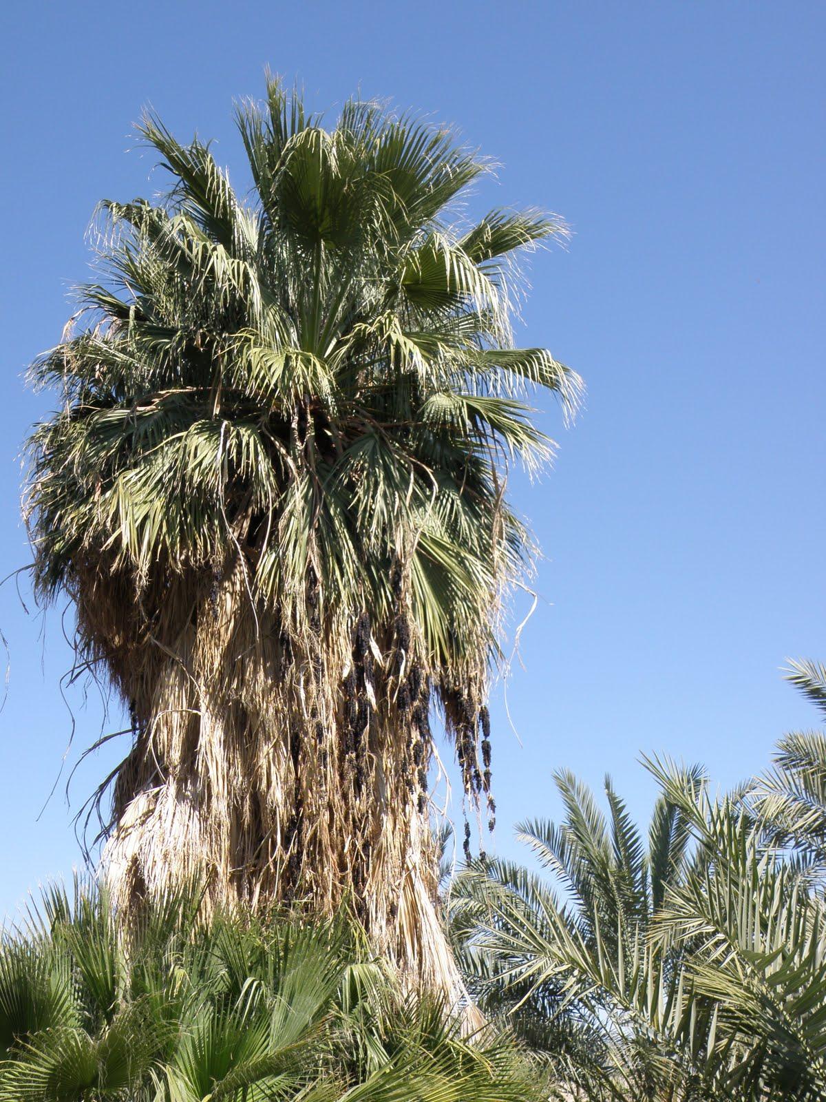 The Hive Palm Beach Louis Sherry
