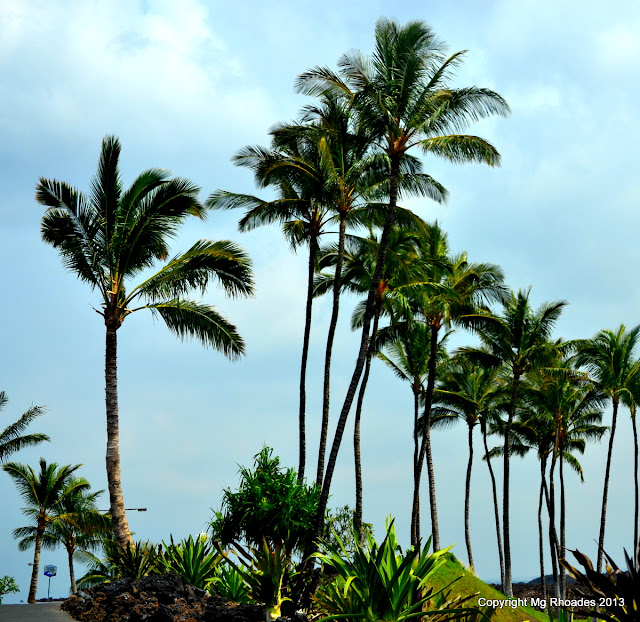 Big Island of Hawaii Palm Trees and Ocean Breezes