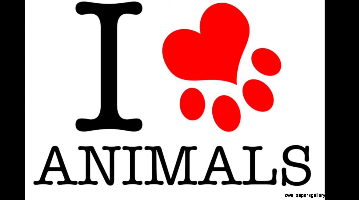 Enzo DC   Animals vs I Love It   YouTube