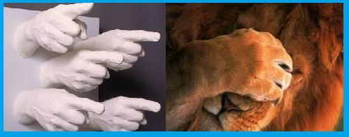 mãos apontando para um leão com a mão no rosto