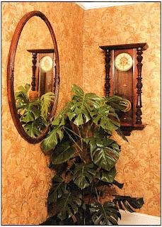 Монстера деликатесная (Monstera deliciosa) прочно занимает место фаворита как одиночное растение, и нет вопросов почему