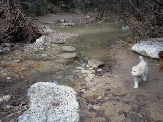 Baxterpoodleblogspot.com