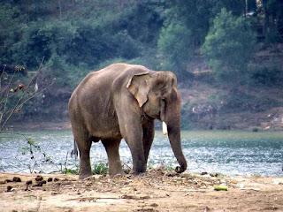 7 Hewan langka di Indonesia yang perlu dilestarikan