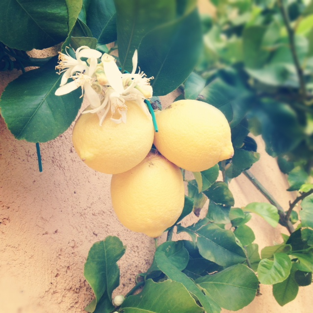 tuscan lemon