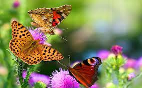 Que significa soñar con mariposas