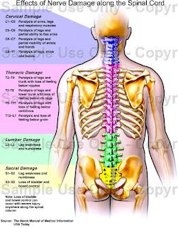 ไขสันหลัง และ กระดูกสันหลัง