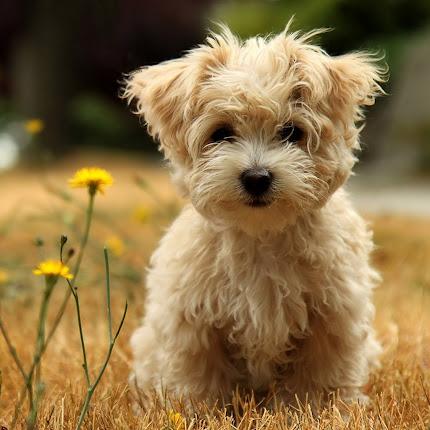 foto anjing lucu