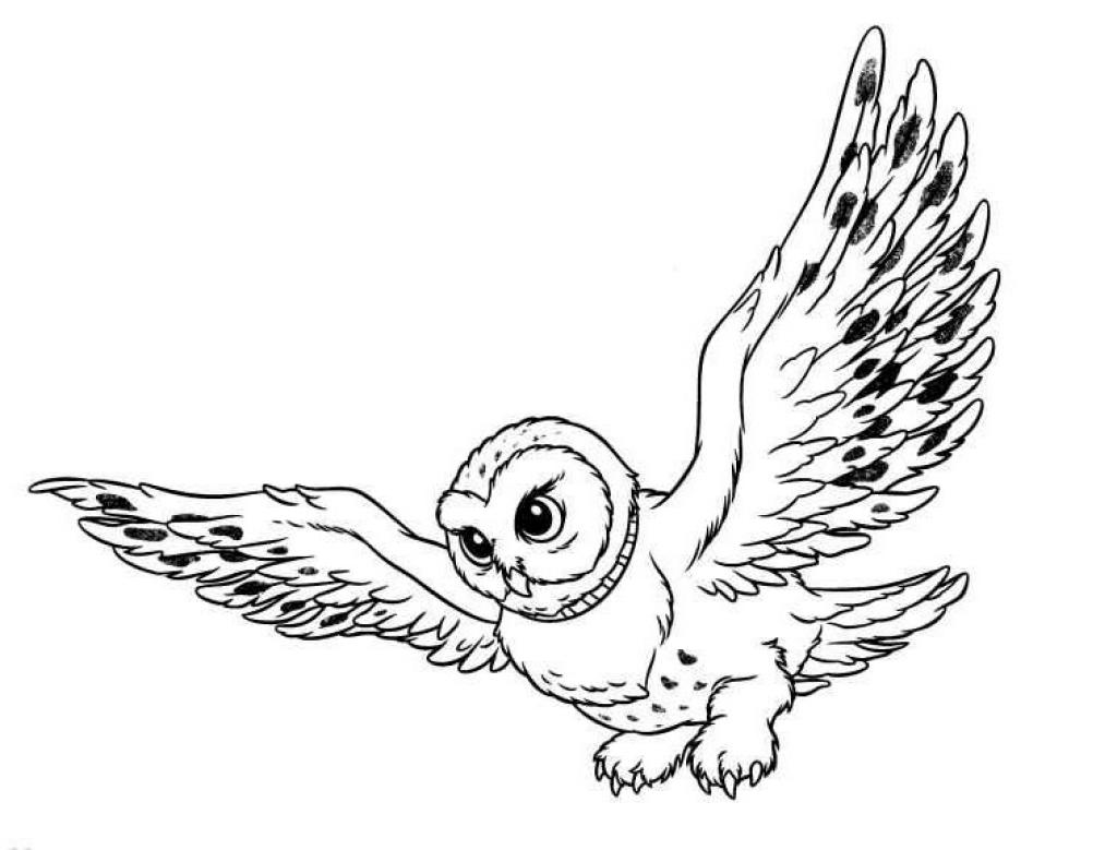 Wild Animal Owl Bird Coloring Books to Print