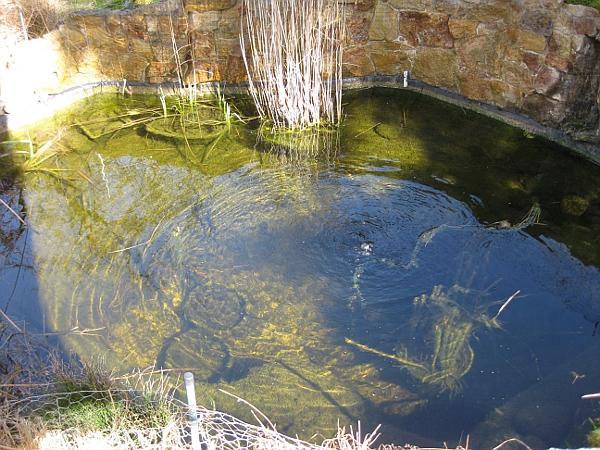 Unser strebergarten hi fisch for Goldfische teich winter