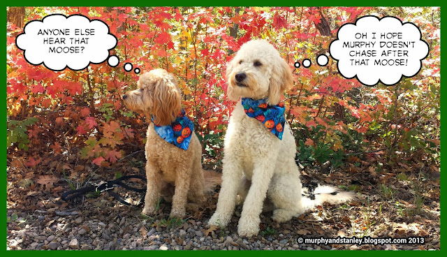 Murphy & Stanley: Happy Autumn