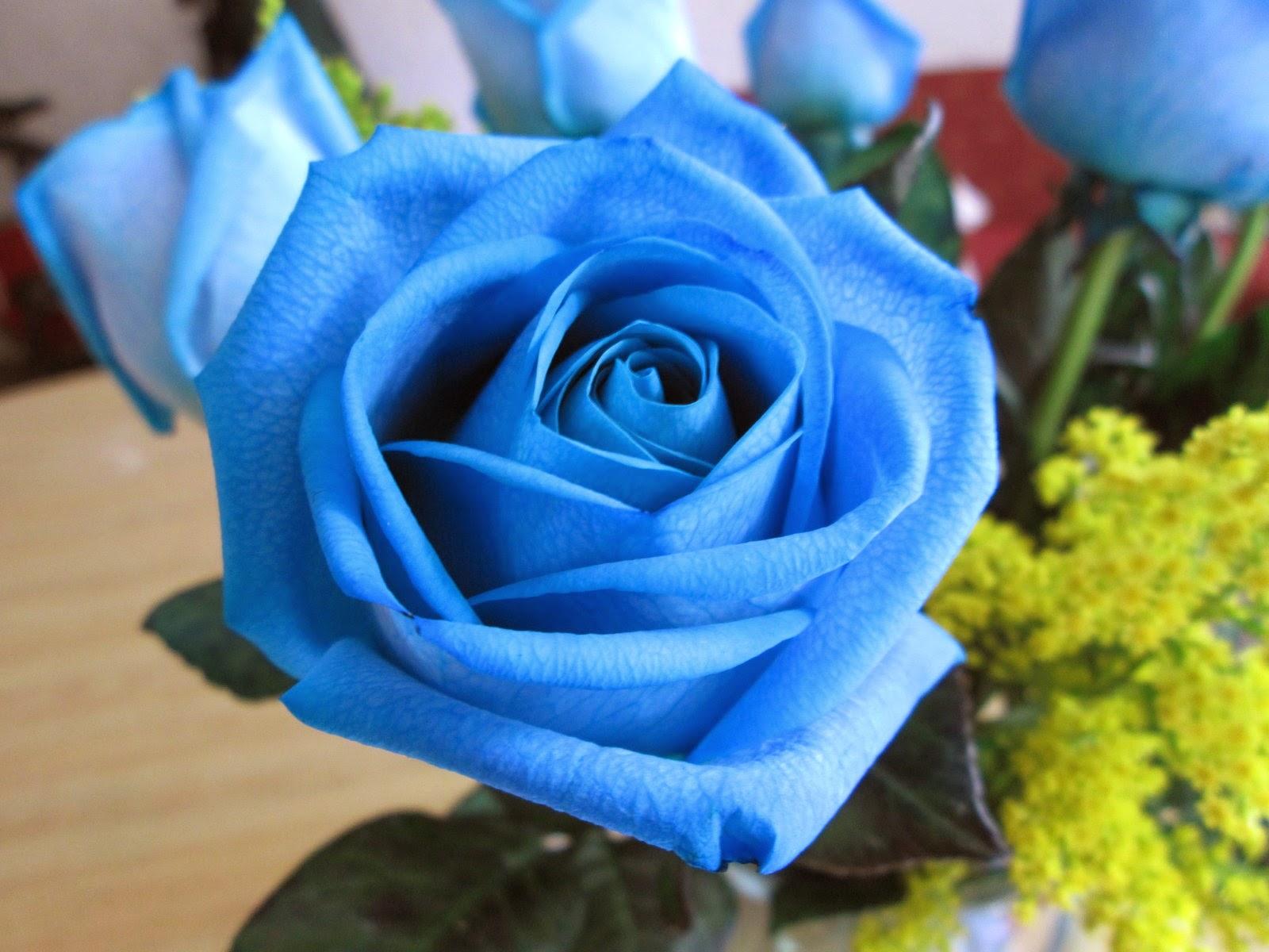 bunga mawar warna biru