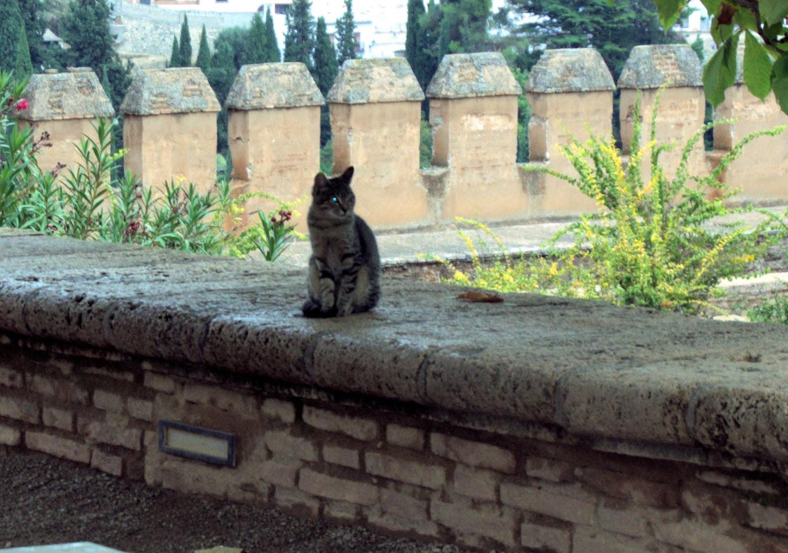 mi carrete fotográfico: Los gatos de la Alhambra